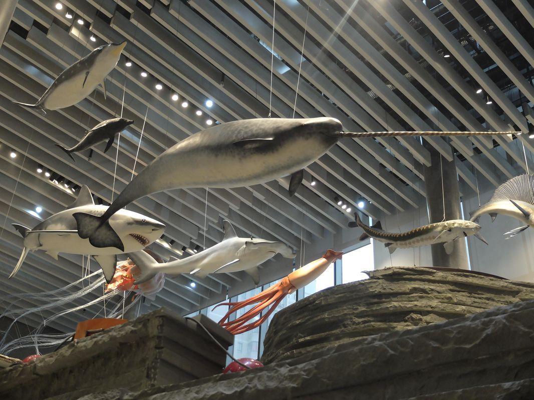 artescienza museo storia naturale Shanghay