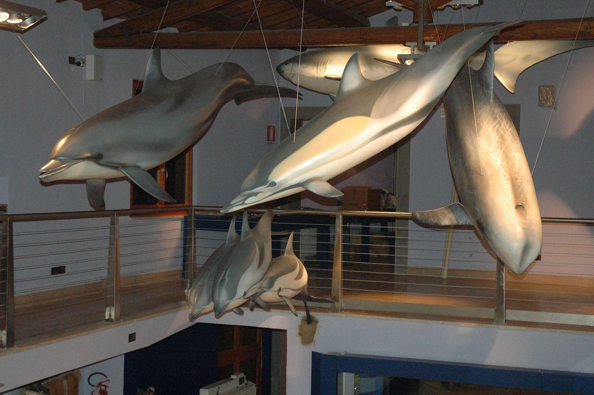 delfini in vetroresina stazione zoologica napoli 2017 artescienza