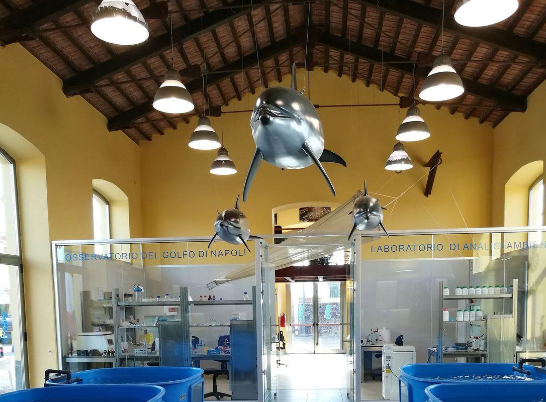 artescienza delfini
