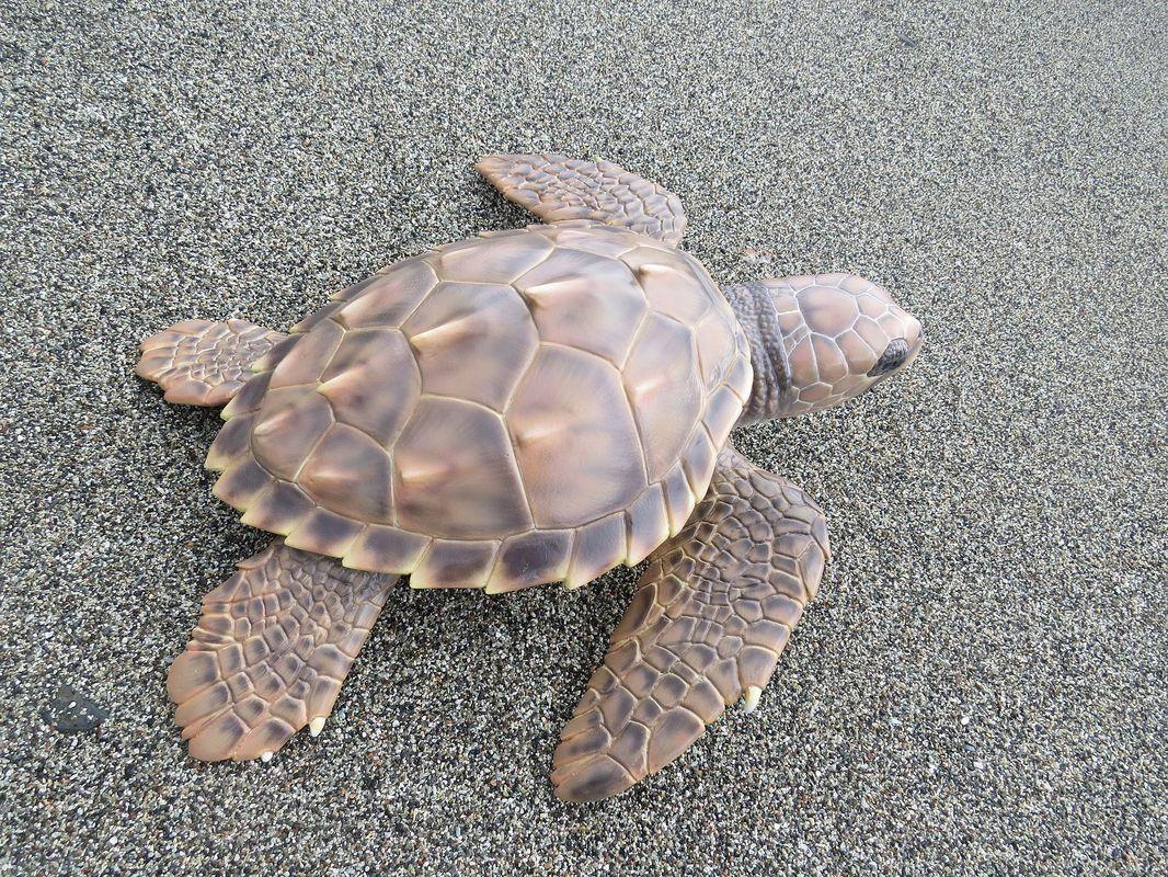 modello vetroresina tartaruga stazione zoologica napoli 2017 artescienza