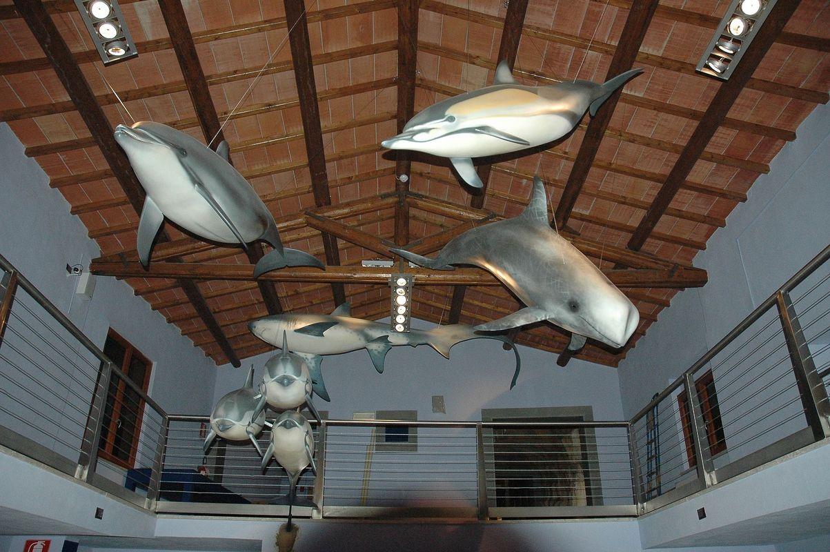 serie di cetacei museo storia naturale grosseto 2013 artescienza