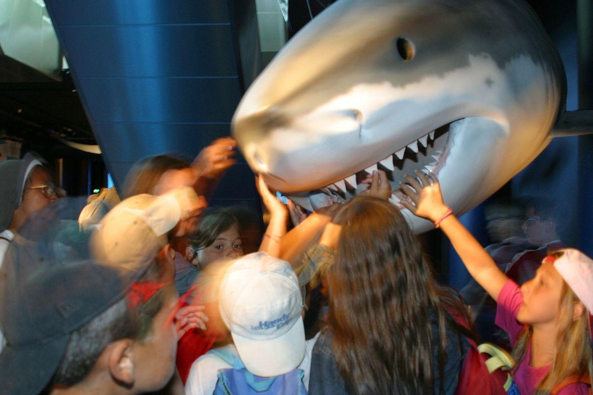 squalo bianco parco oltremare riccione 2012 artescienza