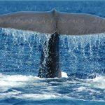 Artescienza: Foto digitale scattata in Mar Ligure durante le spedizioni scientifiche e di documentazione di Artescienza utilizzando strumentazione fotografica professionale ad alta qualiltà