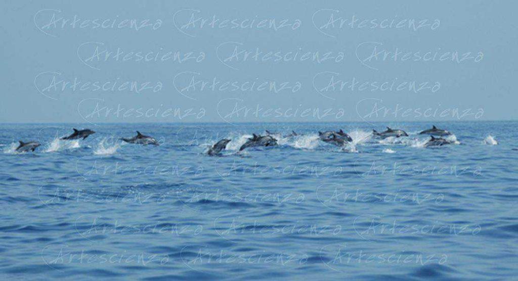 Artescienza: Foto digitale scattata in Mar Ligure durante le spedizioni scientifiche e di documentazione di Artescienza utilizzando strumentazione fotografica professionale ad alta qualità Nikon e Canon