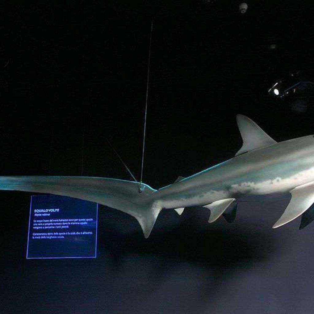 Artescienza: Modello tridimensionale di un pesce luna di 3 metri realizzato per la Sala dei Giganti dell'Adriatico all'interno del parco Oltremare di Riccione.