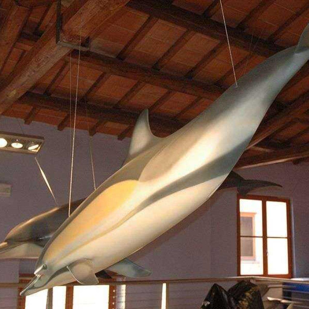 Artescienza: Modello tridimensionale di Delfino comune di 3 metri realizzato per la Sala dei Giganti dell'Adriatico all'interno del parco Oltremare di Riccione.
