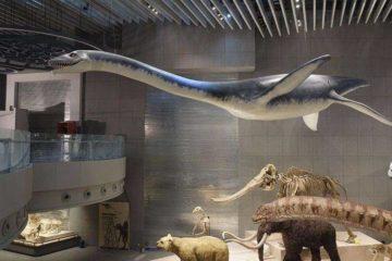 Artescienza: Modello tridimensionale  realizzato per il Museo di Storia Naturale di Shanghai (CINA)