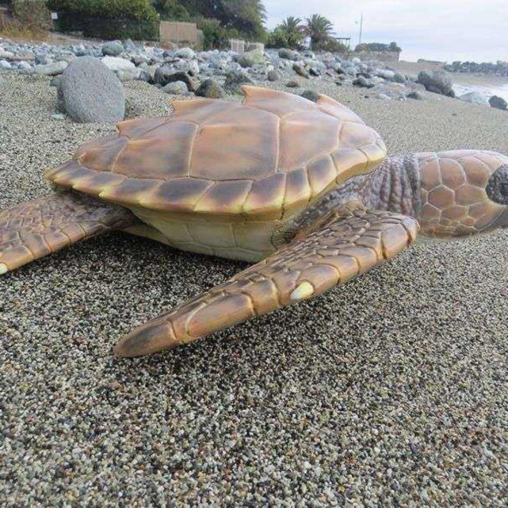 Artescienza: Modello tridimensionale di un giovane di Tartarura marina  realizzata per il Centro recupero tartarughe marine di Portici (Na). Stazione zoologica Anton Dohrn